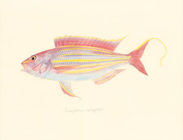 Japanese Artist Creates Delicate Watercolor Paintings of Fish Every Week - My Modern Met