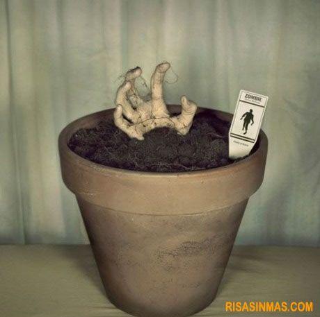 Planta tu propio zombie y disfruta viéndolo crecer. visto en http://bit.ly/yS7Wwv