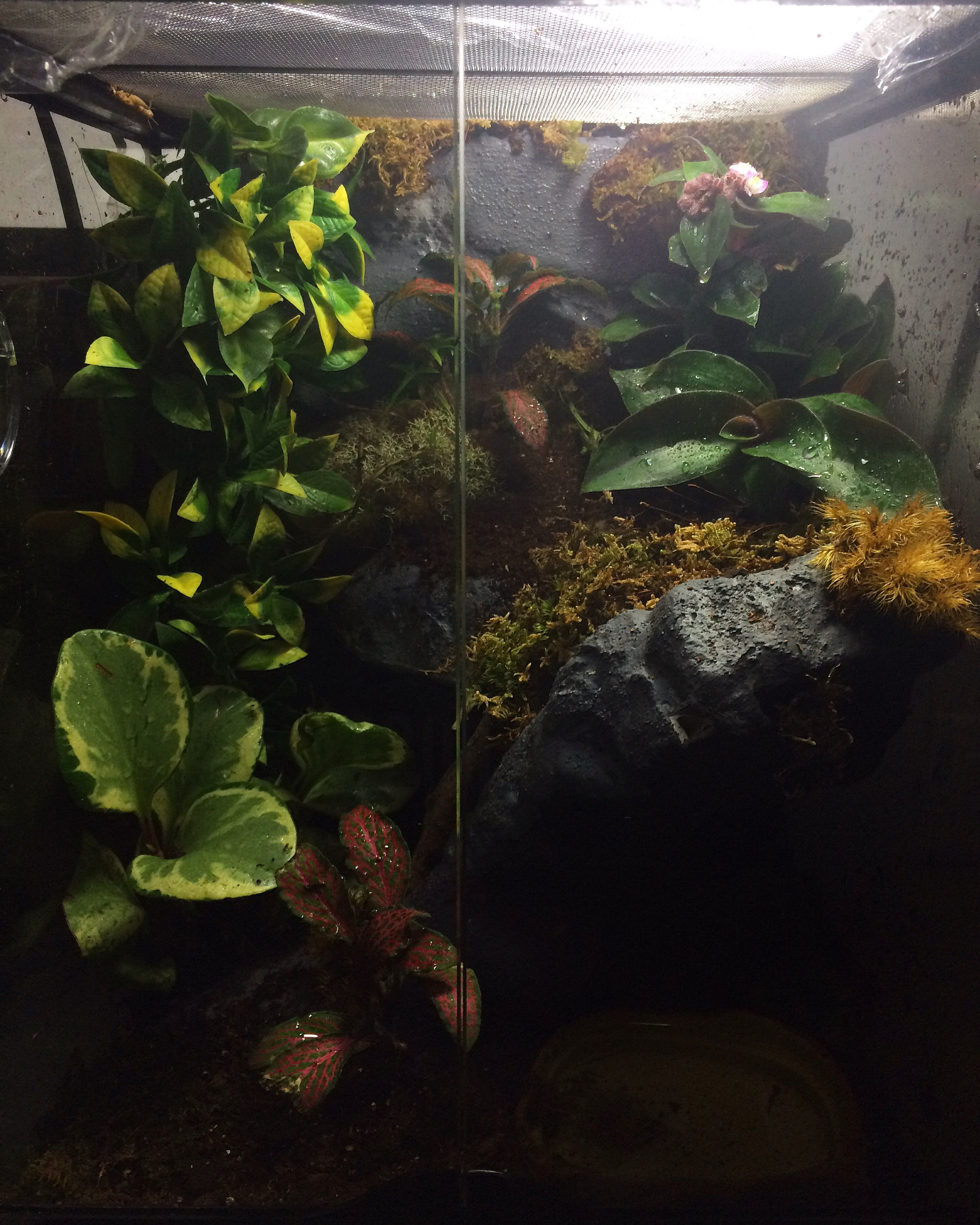 Here Is How I Made My Red Eye Tree Frog Habitat Quickcrafter