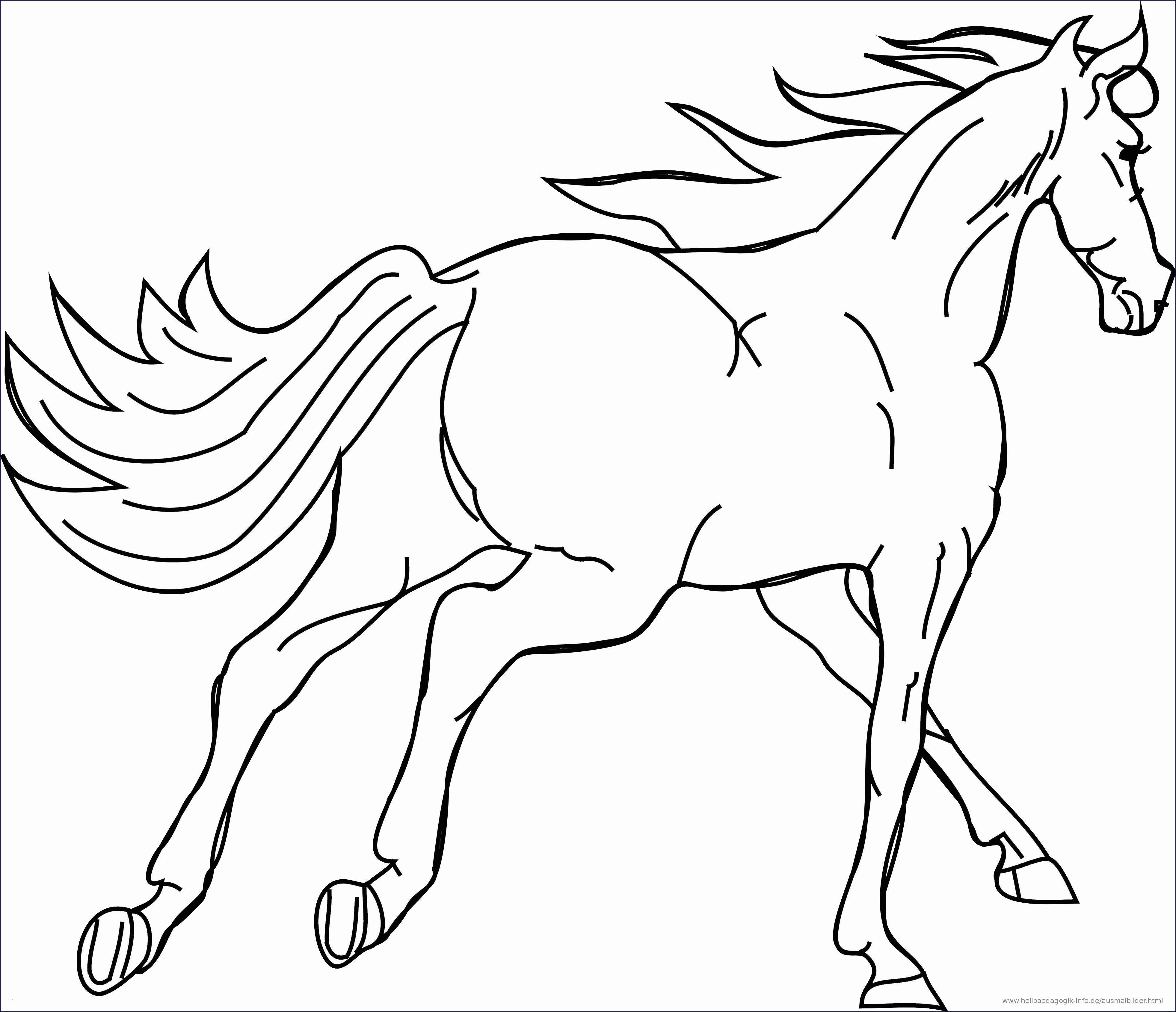 Neu Malvorlagen Tiere Im Wasser Horse Coloring Pages Horse Coloring Horse Galloping [ 3379 x 3925 Pixel ]
