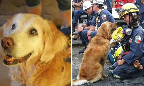Bretagne was one of more than 100 dogs who spent the days and weeks at the site of the World Trade Center after the Sept. 11 attacks.