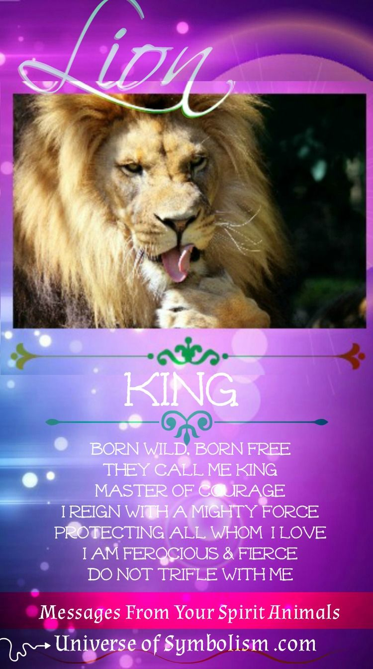 Lion Symbolism Lion Is The Ruler Of The Kingdom Spiritual Meaning