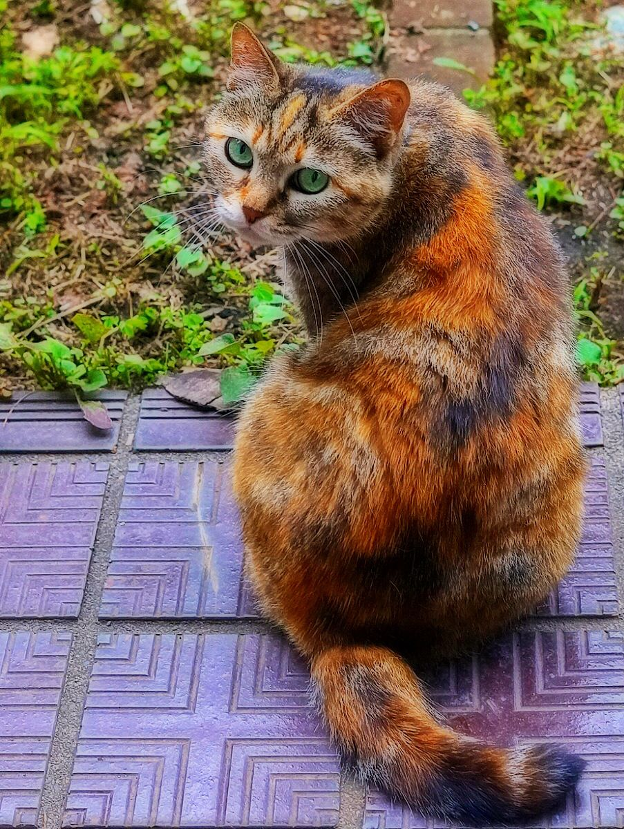 Dark Ginger cat | Ginger cats, Cats, Funny animals