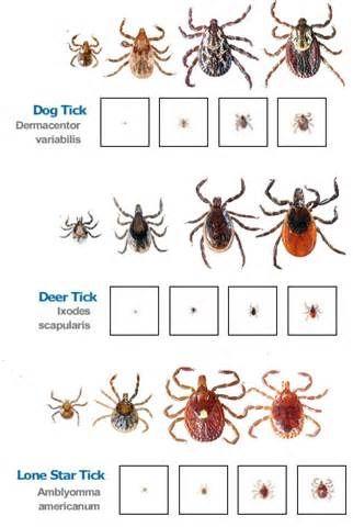 lyme disease jokes - Bing images OMG Pinterest Deer ticks