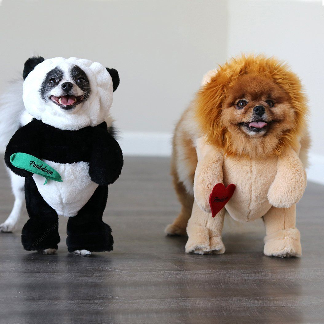 Pandaloon Panda Puppy Dog And Pet Costume Set Walking Teddy Bear
