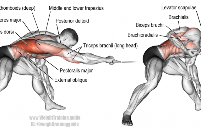 Bent-over one-arm cable pull exercise | Anatomía del Ejercicio ...