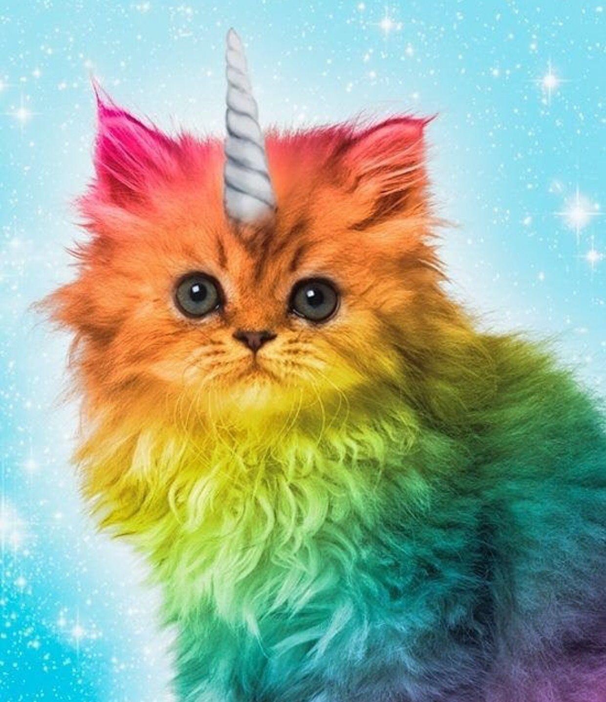 Unicorn Kitty Www Lularoejilldomme Com Posteres De Gato Animais Coloridos Desenhos De Animais Fofinhos