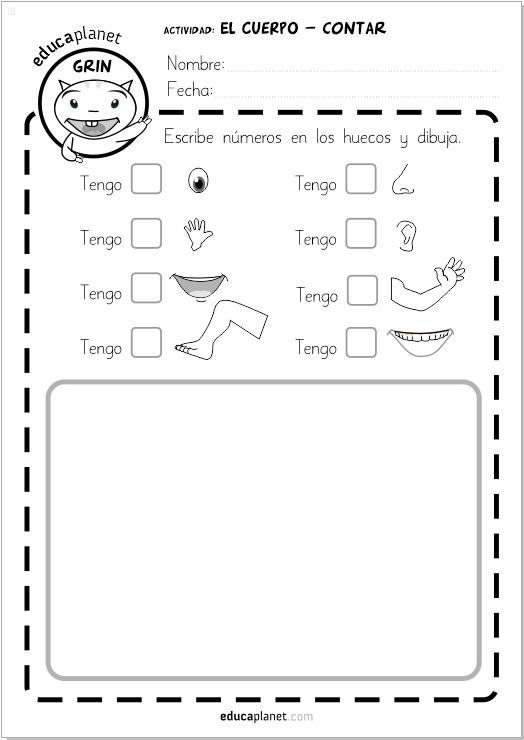 Ficha cuerpo humano contar bilingüe GRATIS para niños | Actividades ...