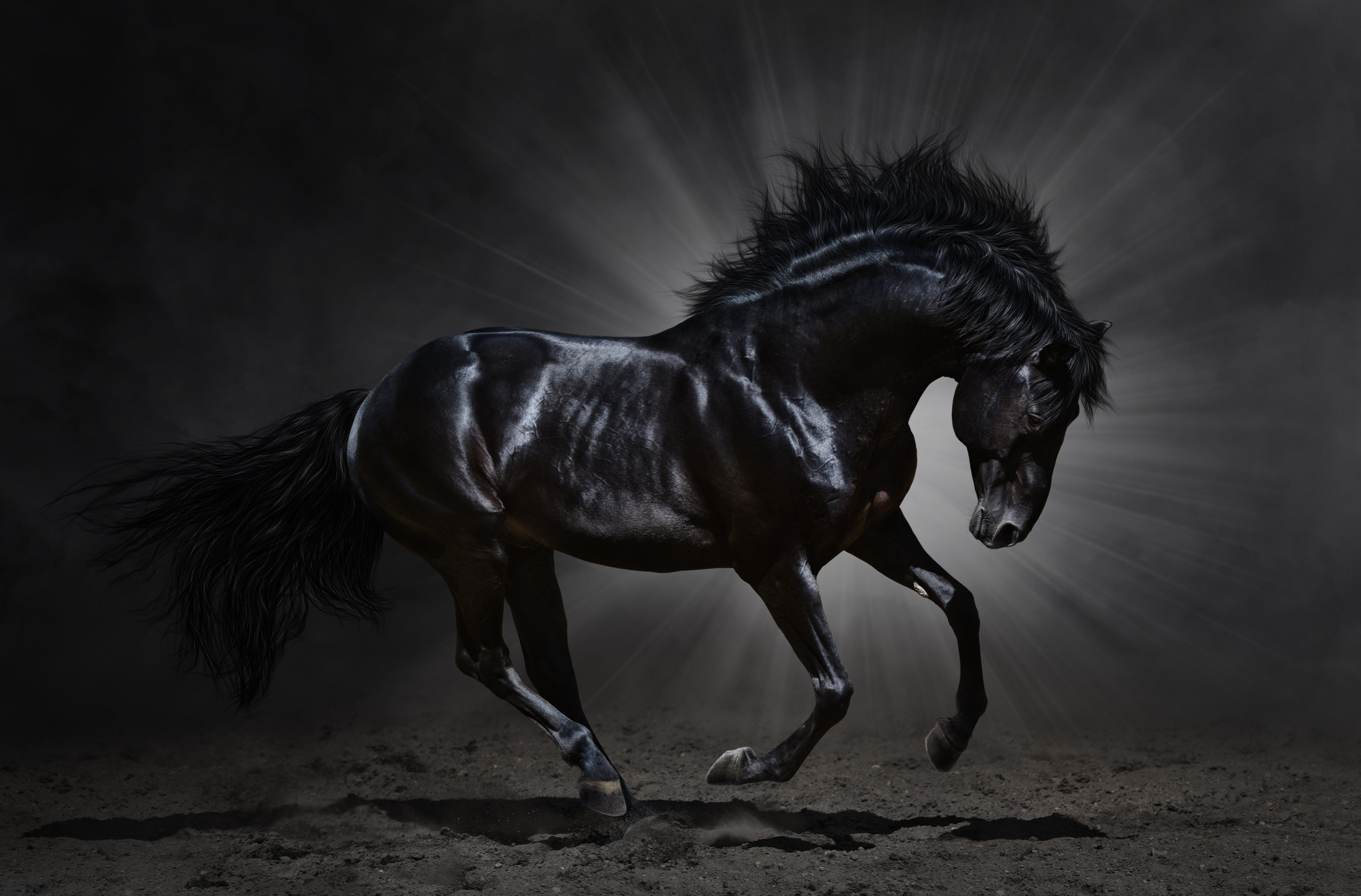 Horse pictures in hd white horses hd wallpapers download free