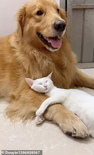 Dog grooms his best friend cat which returns the l