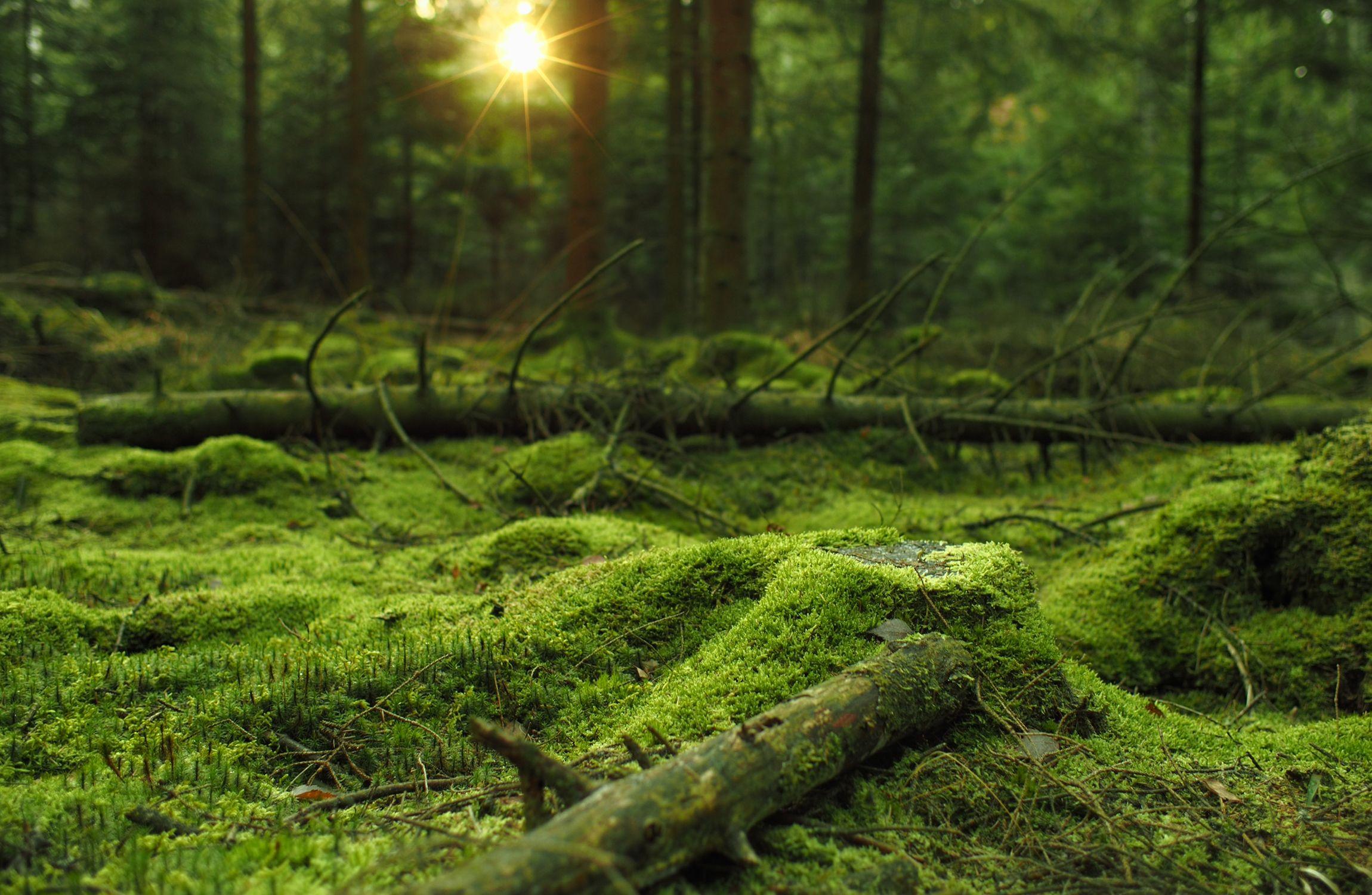 Mossy Forest Hd Wallpaper Martin Wallgren Jpg 2300 1500 Green Wall Art Night Sky Wallpaper Green Wall