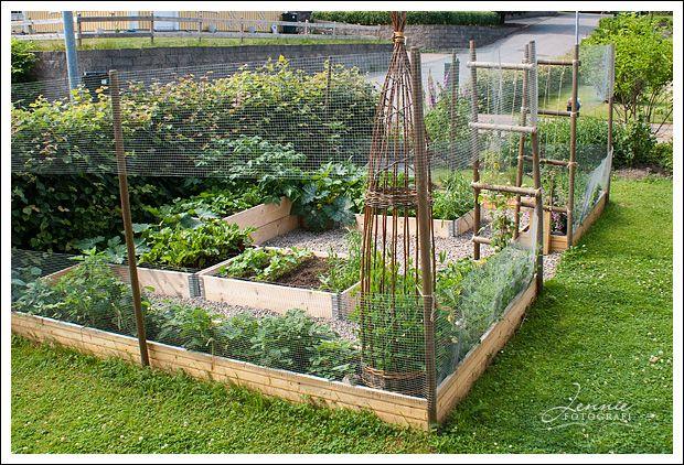 Deer and rabbit proof garden Outdoors Pinterest Vegetable