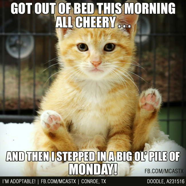 Aaaand it was all downhill from there... #mondays # ...