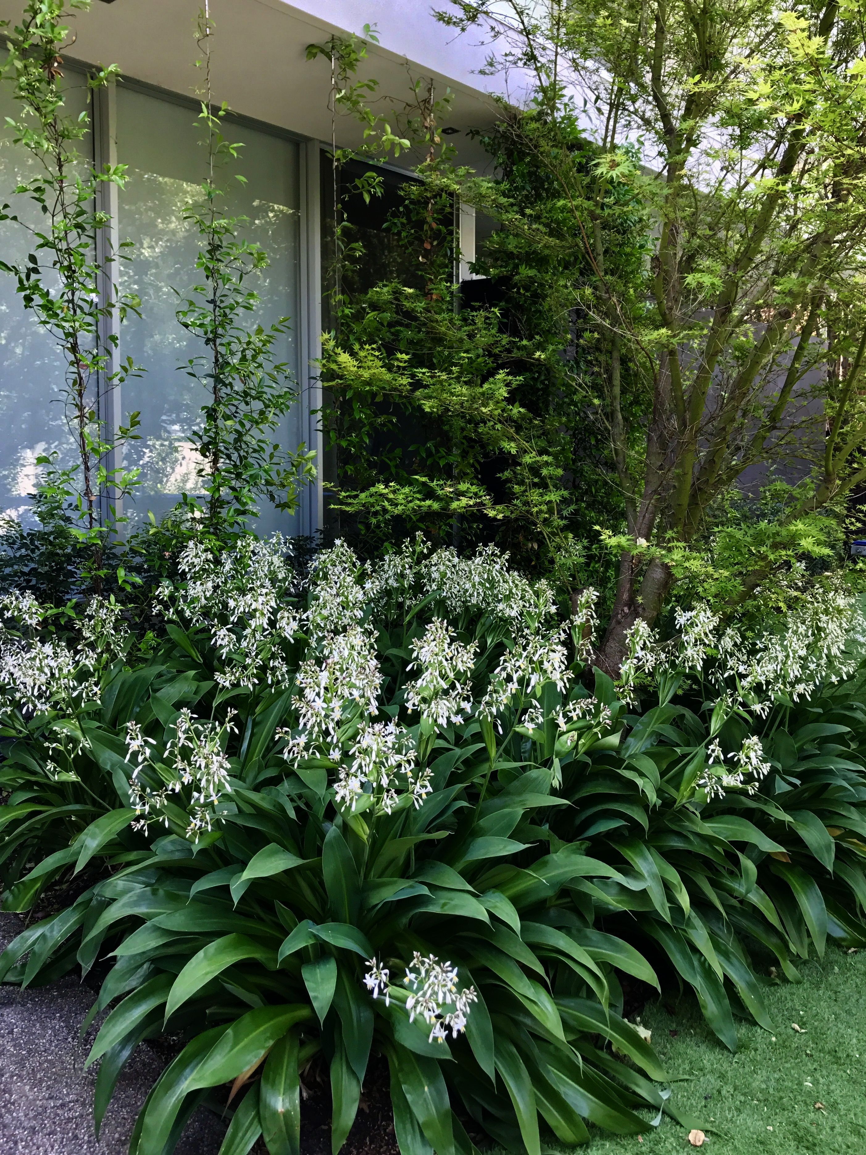 Best Landscape Architecture Design Software For Landscape Gardening Jobs Norfolk Off Landscape Gardening Hourly Rate Shade Garden Native Garden Tropical Garden