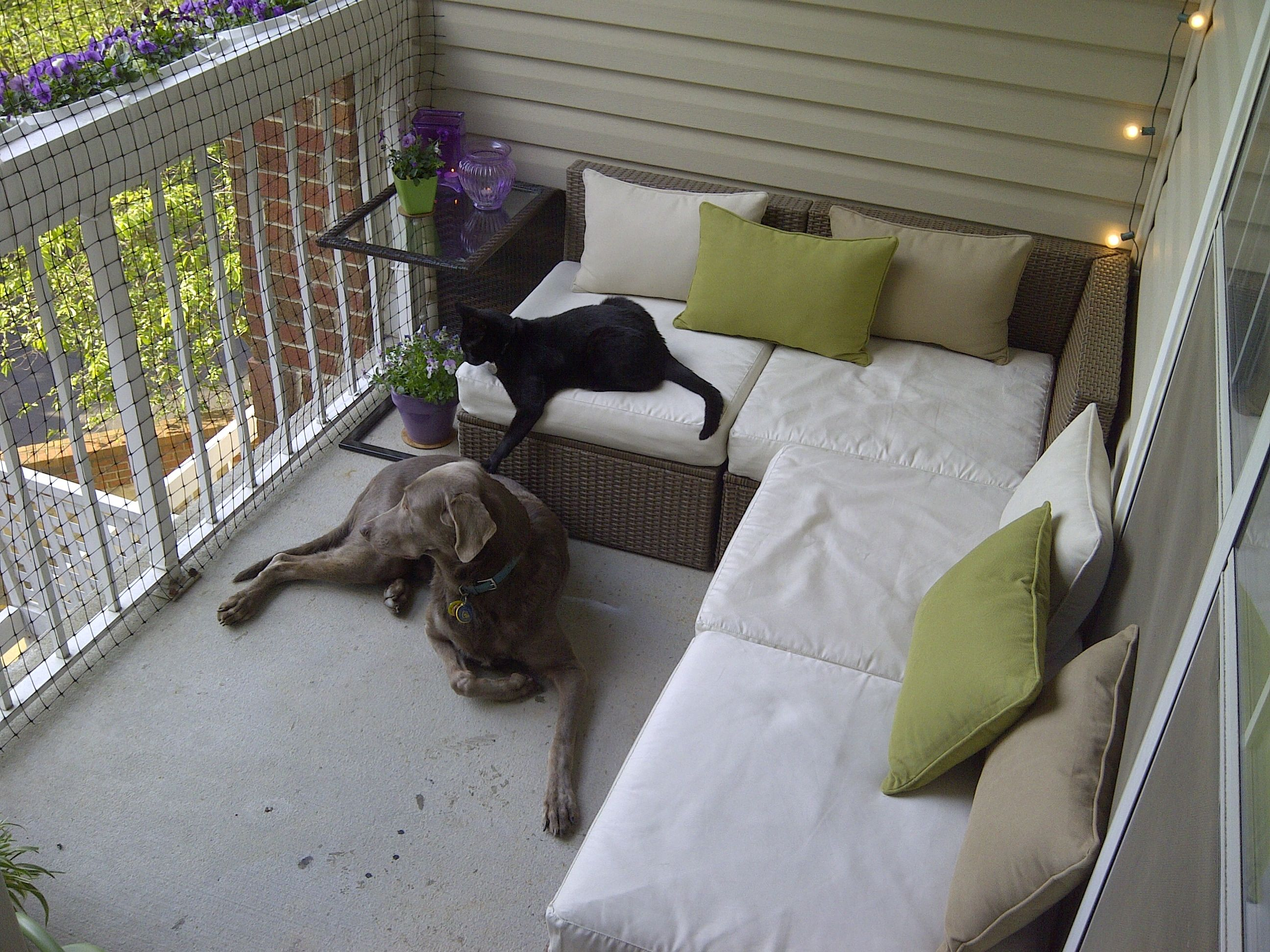 Pin By Derek Newspaper Cat On Cats 365 Apartment Porch
