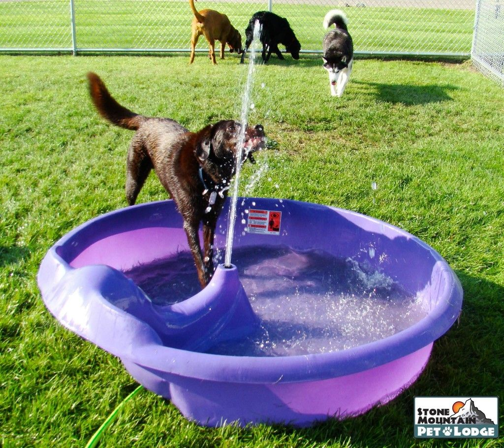 Your Dogs Will Adore This Innovative Daycare And Lodging