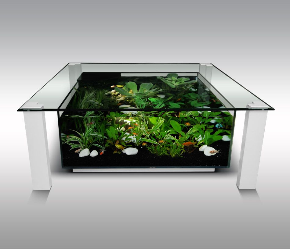 Aquarium table basse for home pinterest aquarium for Table salon aquarium