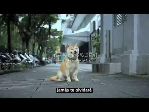La Historia De Un Perrito Que Hizo Llorar Al Mundo Entero Imposible No Llorar Perros Animales Gif Perrito