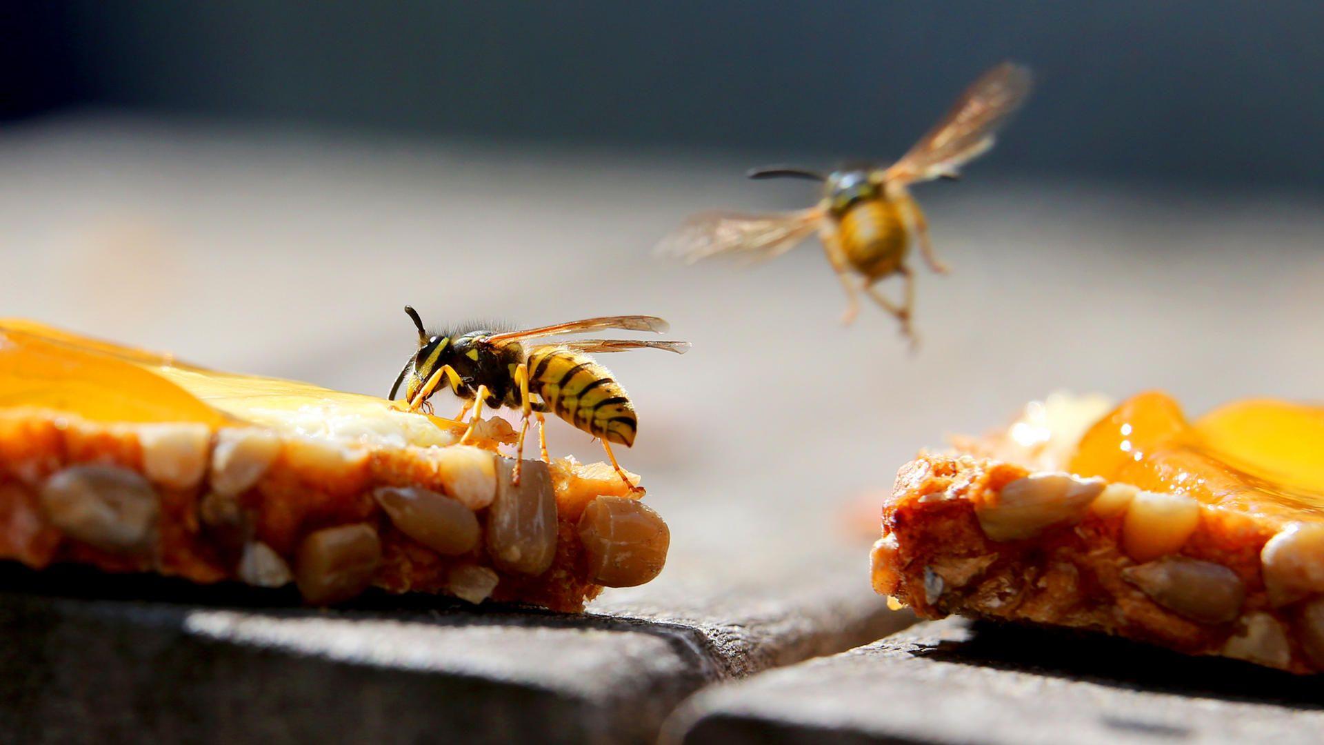 Kaffee Trick Hilft Gegen Lastige Wespen Lebensmittel Essen Essen Nahrung