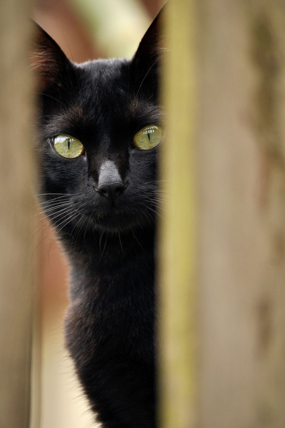 20 Black Cat Names for Your Spooky or Sweet Feline in 2020