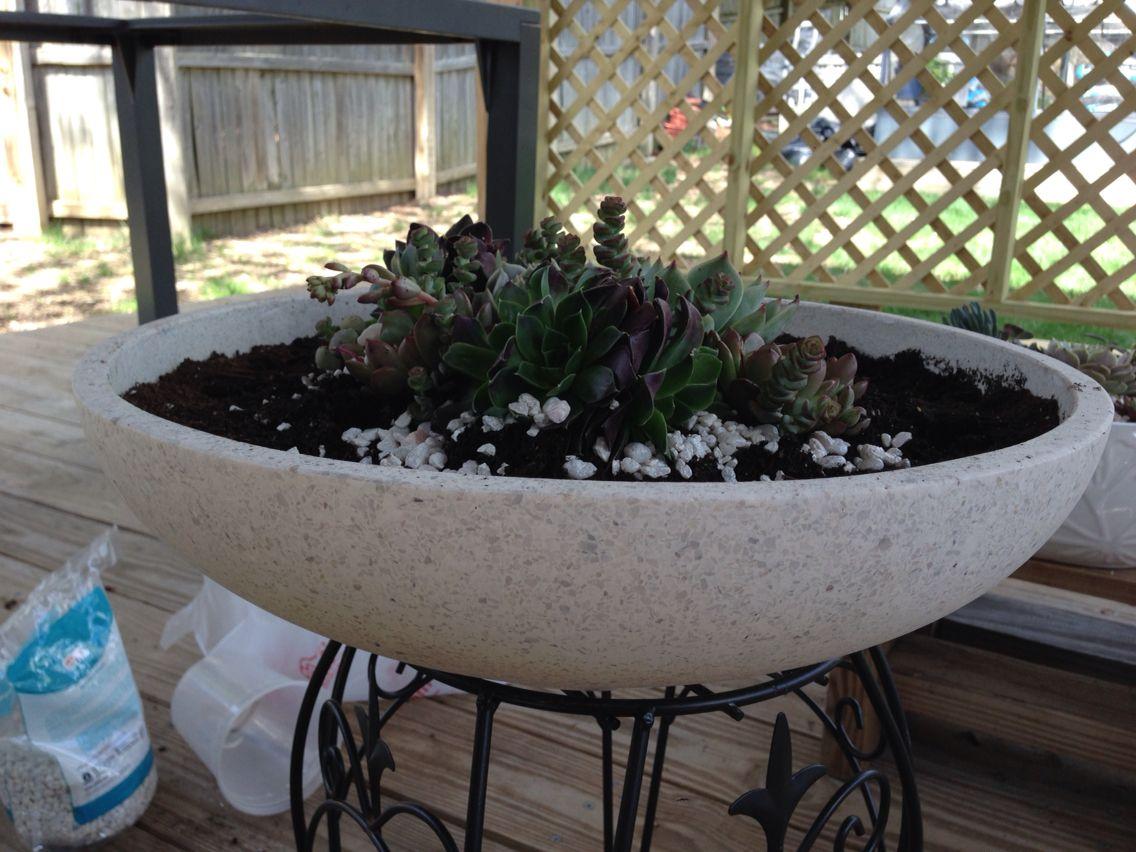 Nicole Miller Planter From Home Goods 19 99 Planters Garden Plants