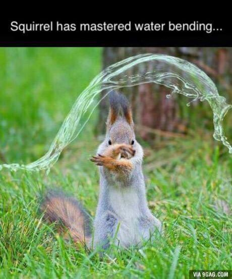 Funny Animal Memes For You To Laugh Loud (20 Pics) - Page 4 of 4 - Awed! Owl #funny #funnymemes #funnyanimals #memes #lol #rofl #hilarious #hilariousmemes #funnypictures #funnypics #funnyanimalpictures