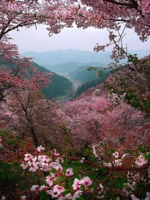 Spring In West Virginia Nature Beautiful Nature Beautiful Places
