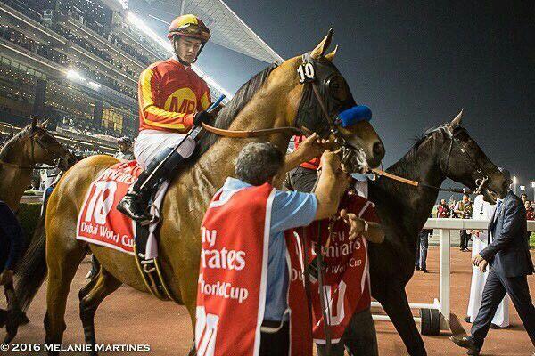 f9d7a5435dc Hoppertunity wins in Dubai!