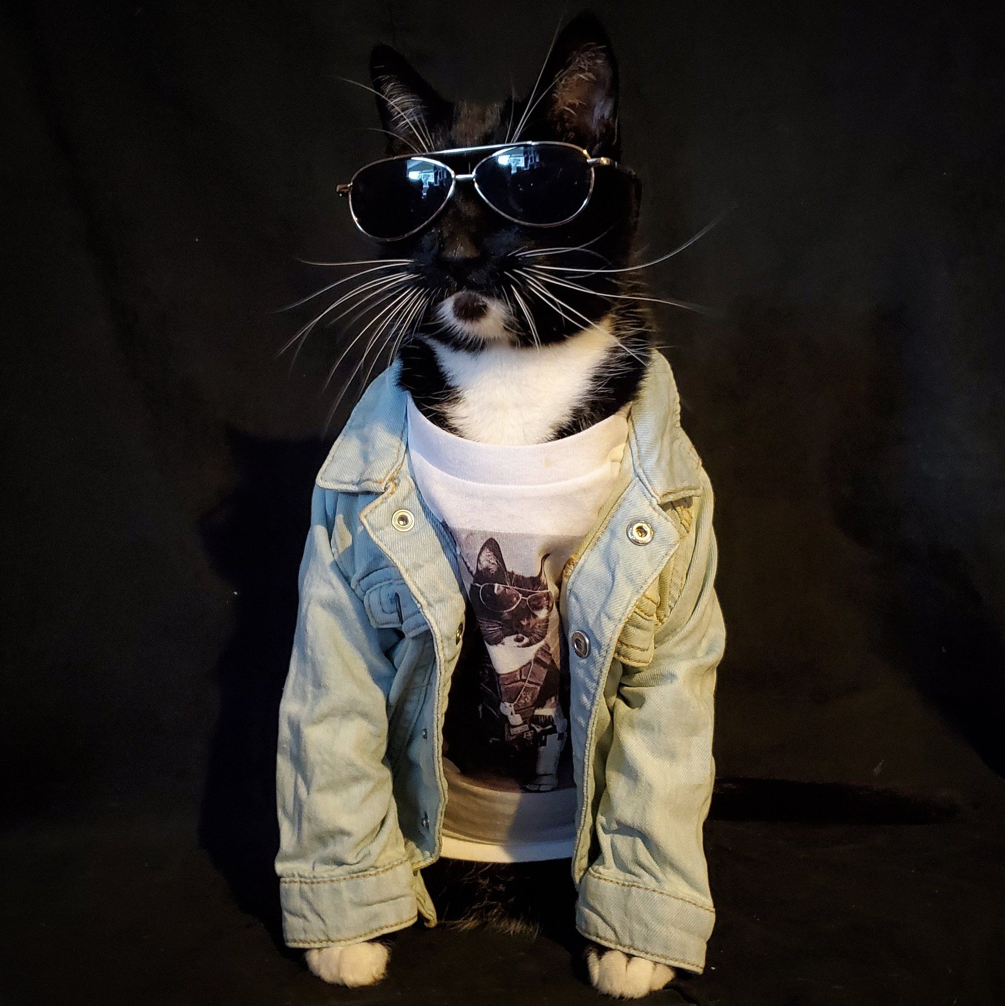 Cat Cosplay on Twitter: