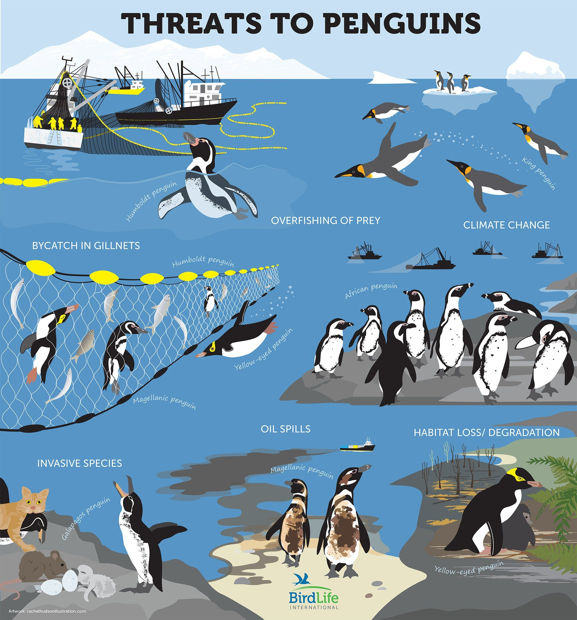 We All Love Penguins  But Theyre In Big Trouble