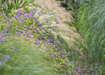 Gartengestaltung Mit Gräsern pennisetum geranium miscanthus moderne gartengestaltung mit