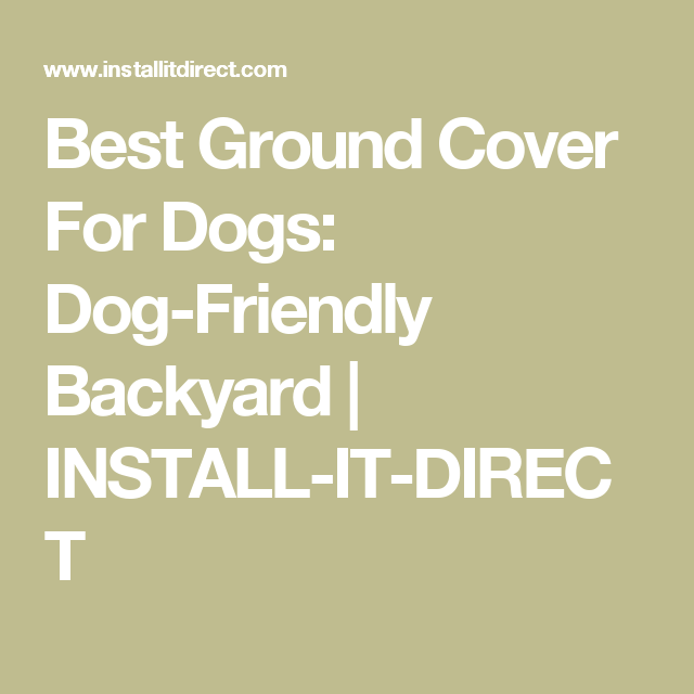 best ground cover for dog run
