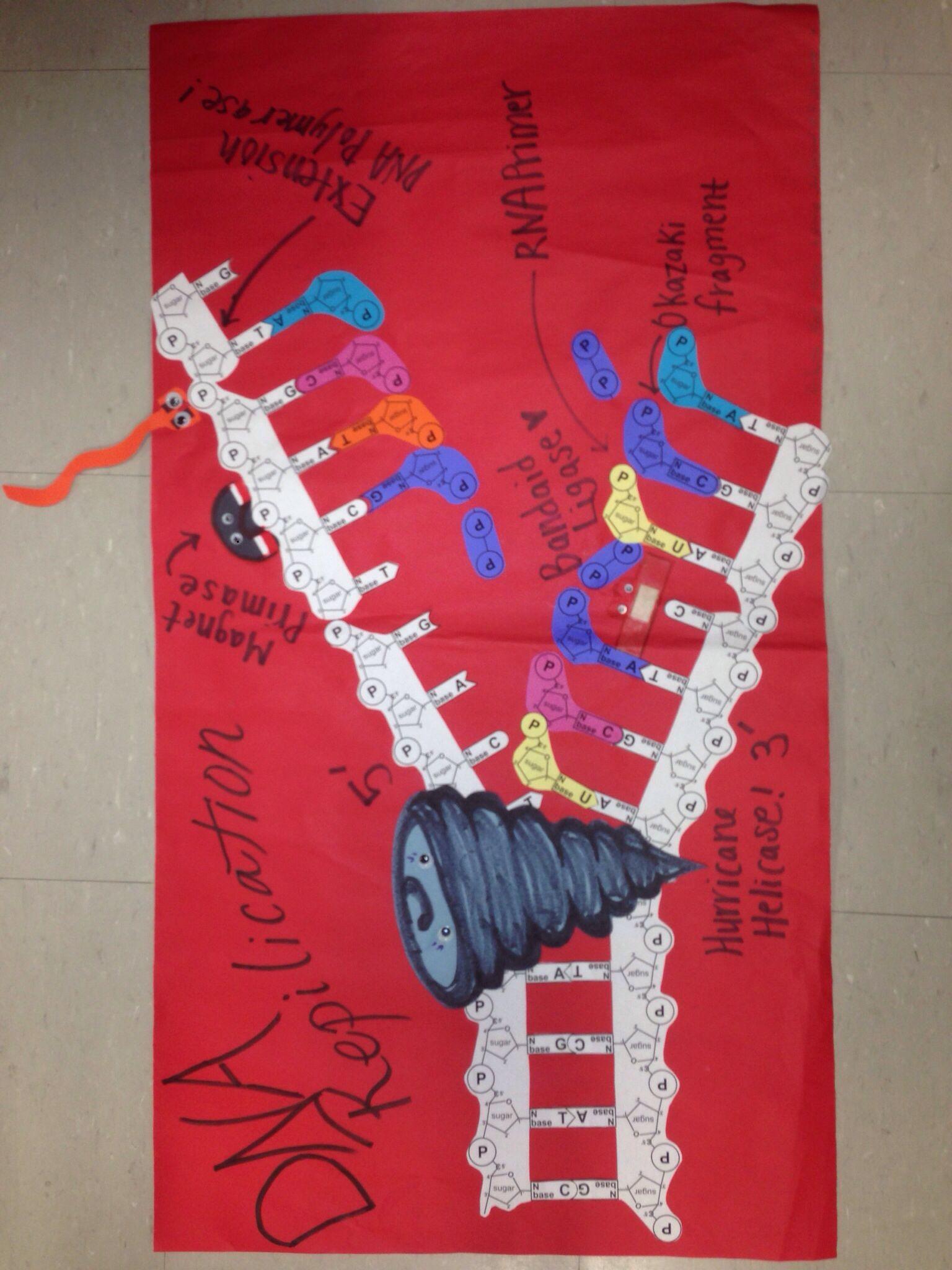 Dna Replication Poster Biology Class Teaching