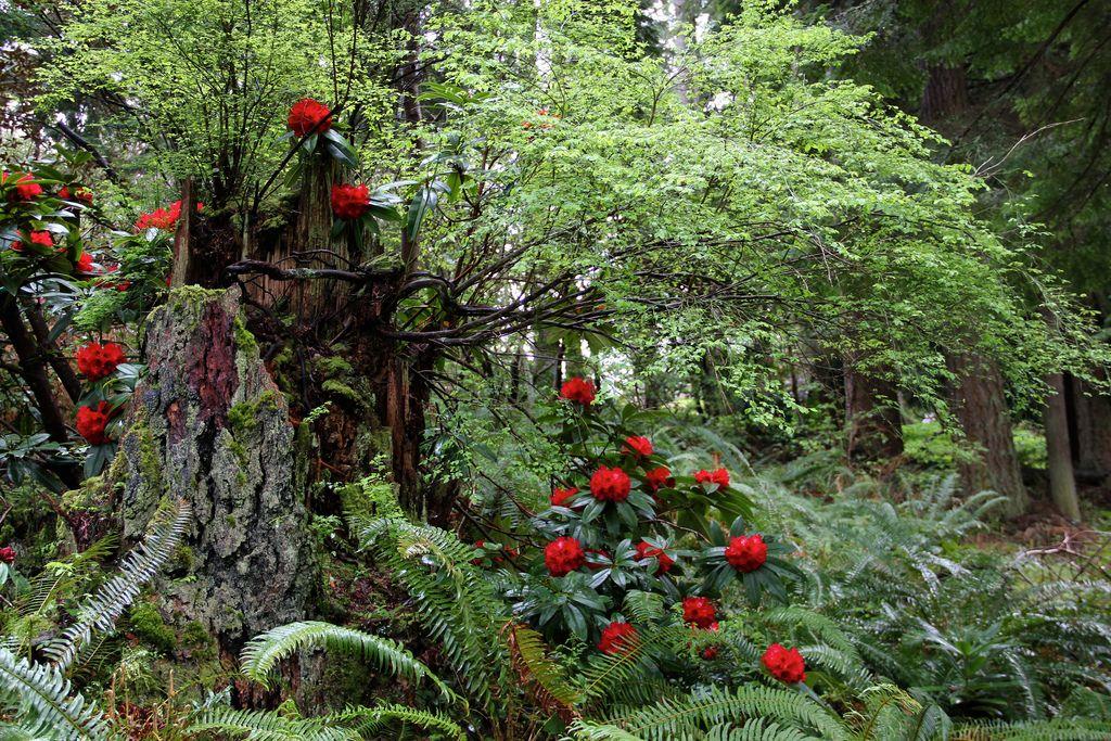 Meerkerk Gardens 12\'0426 - 069 | Gardens and Woodland garden