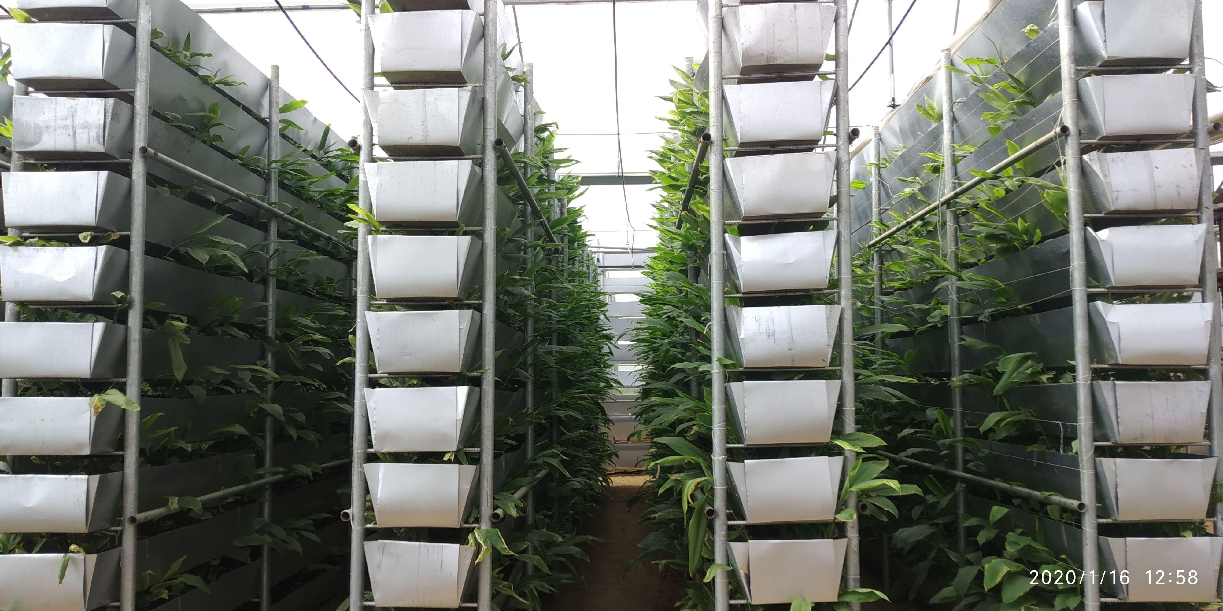 Vertical Farming in India in 2020 Vertical farming