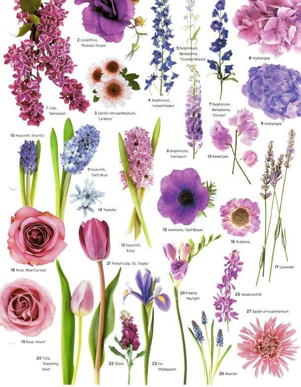 Pinks And Purples Flower Names Purple Flowers Love Color