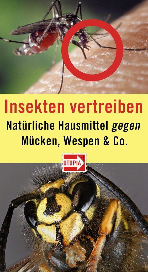 Insekten Vertreiben Mit Natürlichen Hausmitteln Mücken Wespen Co Muss Man Nicht Gleich