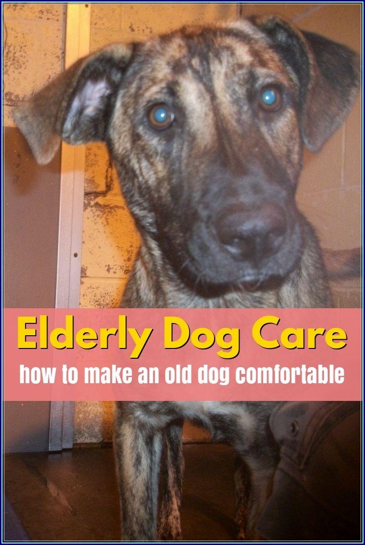 The Best Options For Elderly Dog Care Elderly Dog Care Dog Care