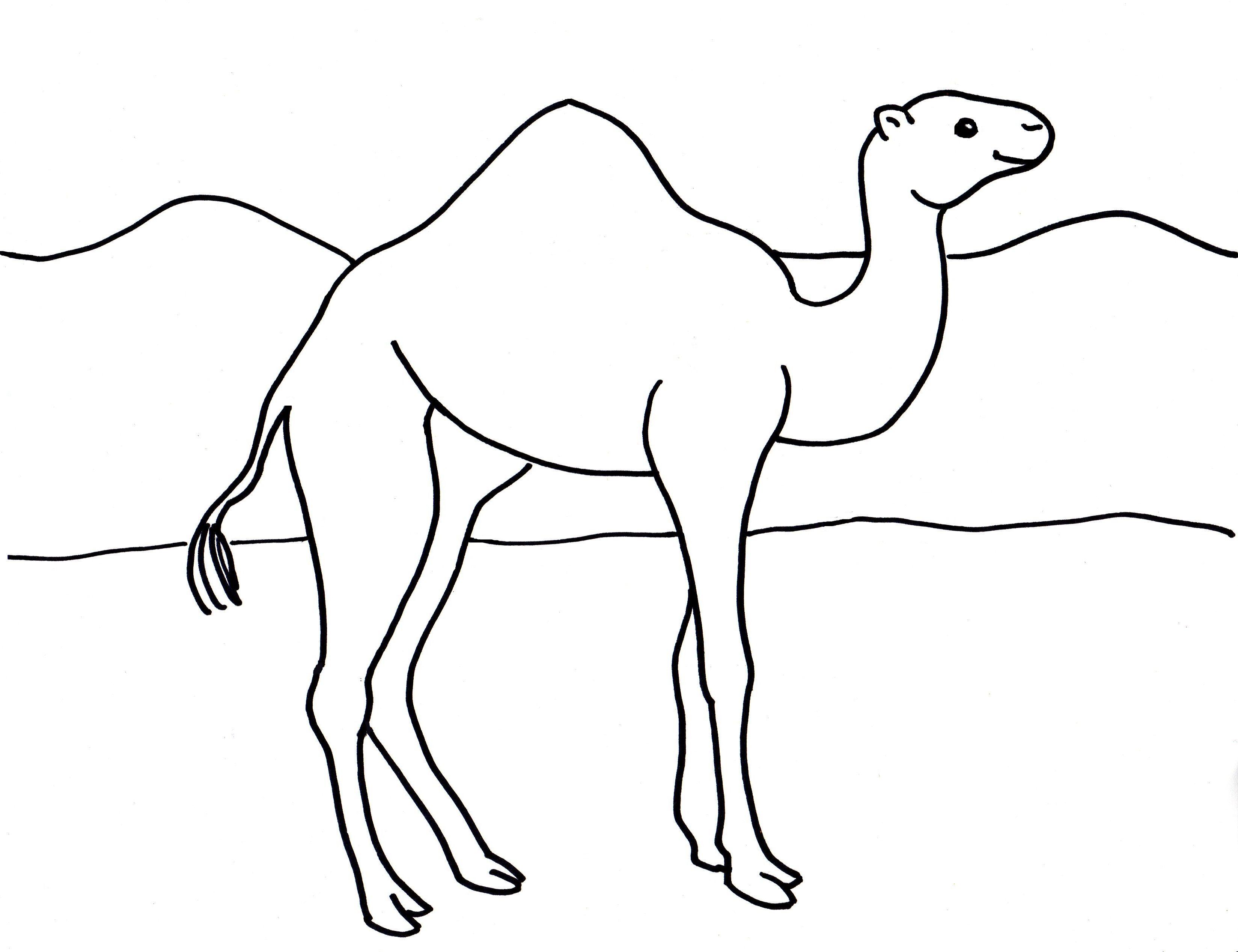 решении картинка верблюд нарисовать его название связано