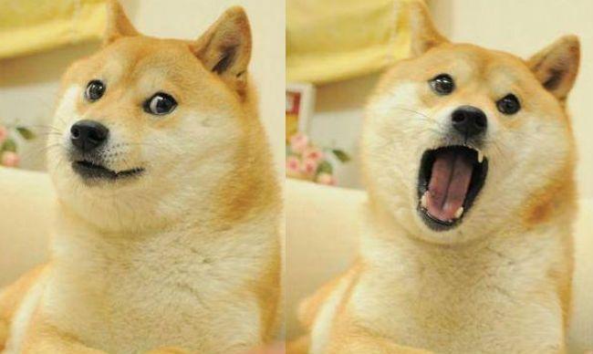 Doge shibe original - photo#1