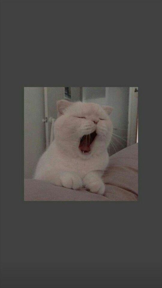 Simak yuk artikel berikut ini tentang gambar profil (pp) wa keren dan aesthetic terbaru. Gambar Kucing Aesthetic Lucu Kicau Sejati