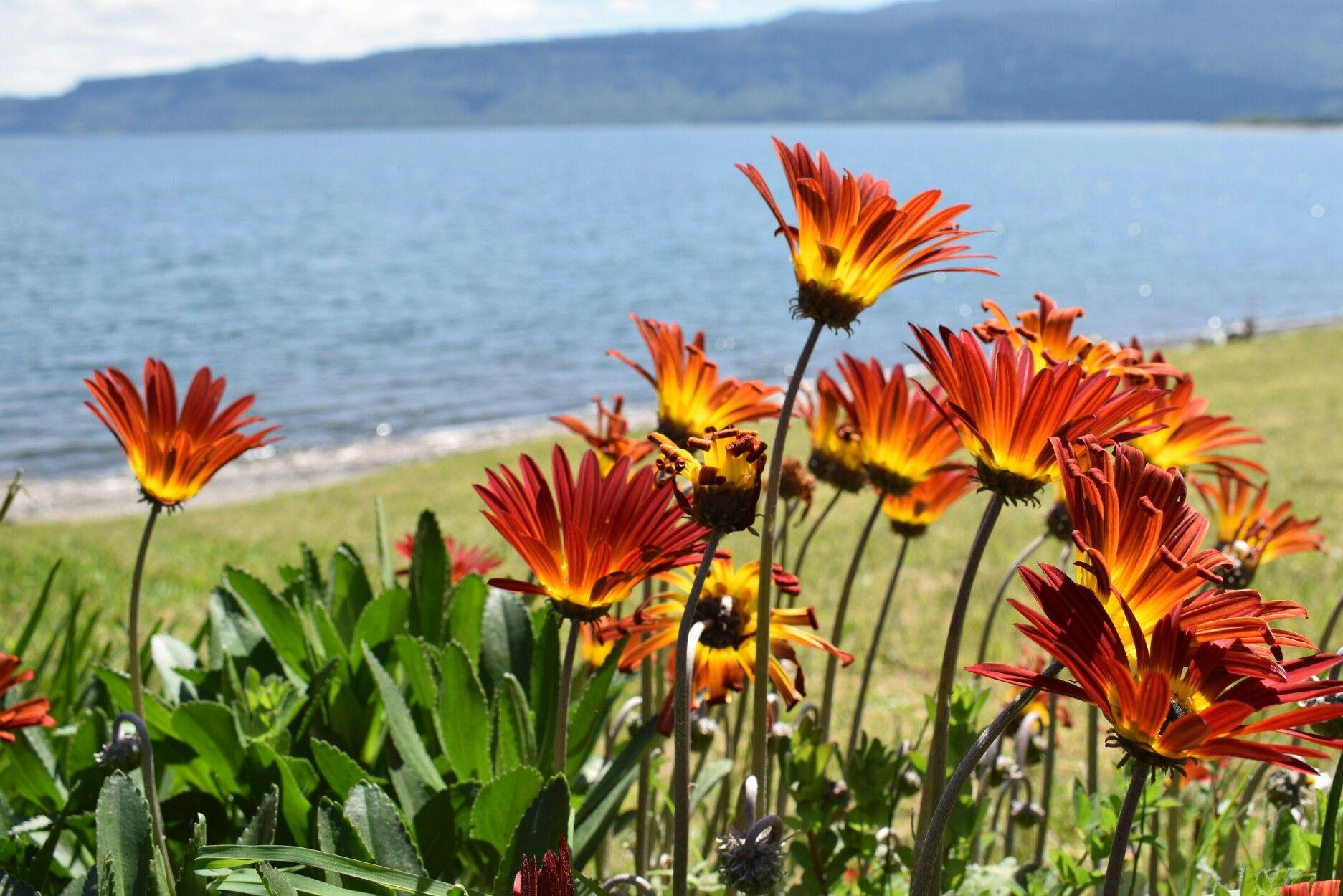 Lago Puyehue Osorno Hobbie Me Creo Fot Grafa Pinterest Lagos # Muebles Puyehue