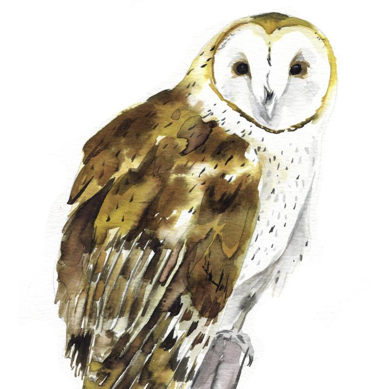 Barn Owl Watercolor Kit Owl Watercolor Owl Painting Kids Barn Owl