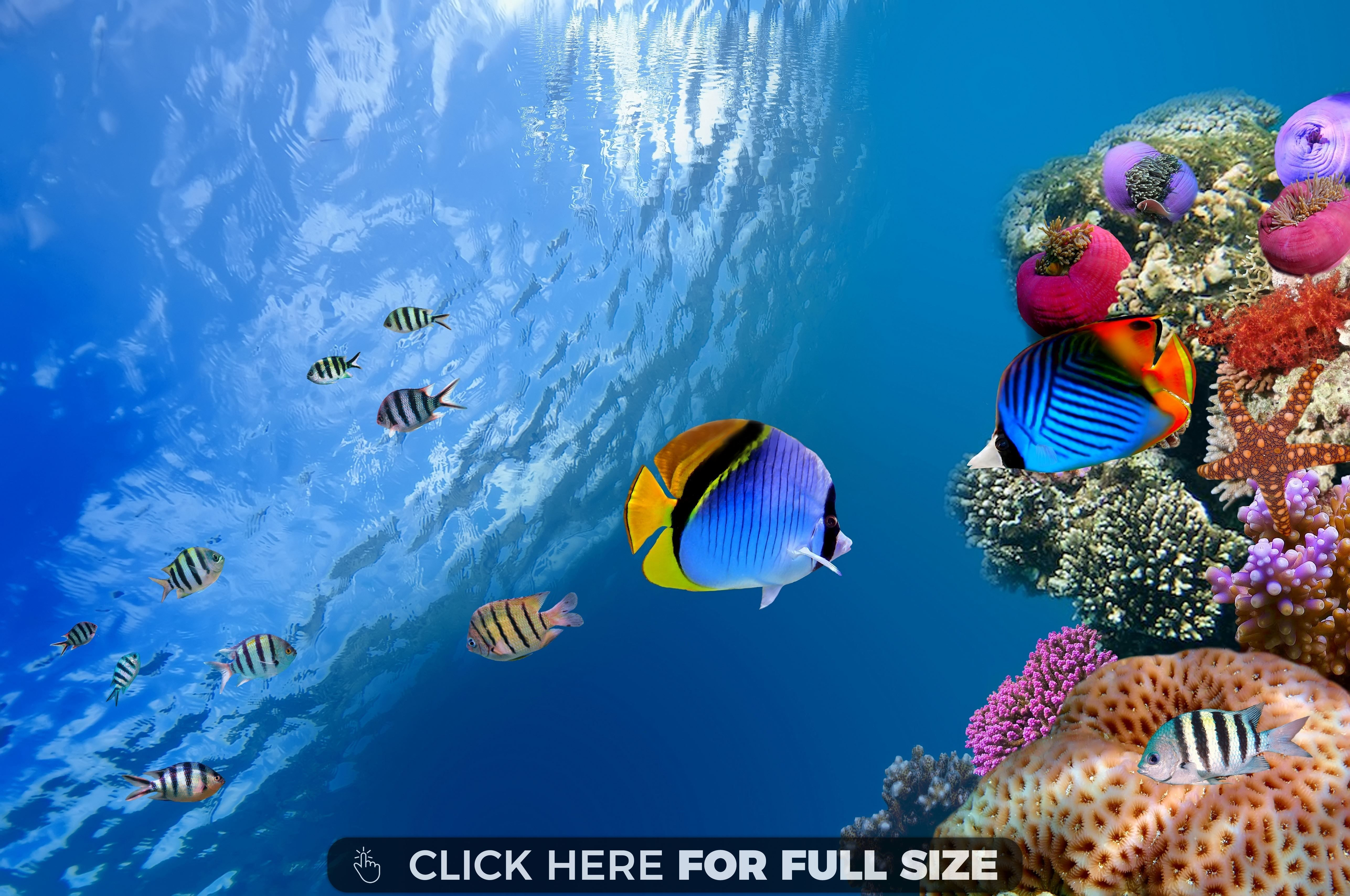 Beautiful Ocean Fish Wallpaper Underwater Wallpaper Fish Wallpaper Underwater Fish