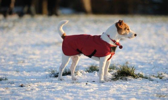 Jo kevyt pakkanen voi olla liikaa: Mistä tietää, että koira palelee?   http://www.avatv.fi/minisaitit.shtml/tassuklubi/neuvola/jo-kevyt-pakkanen-voi-olla-liikaa-mista-tietaa-etta-koira-palelee/2013/11/1829386
