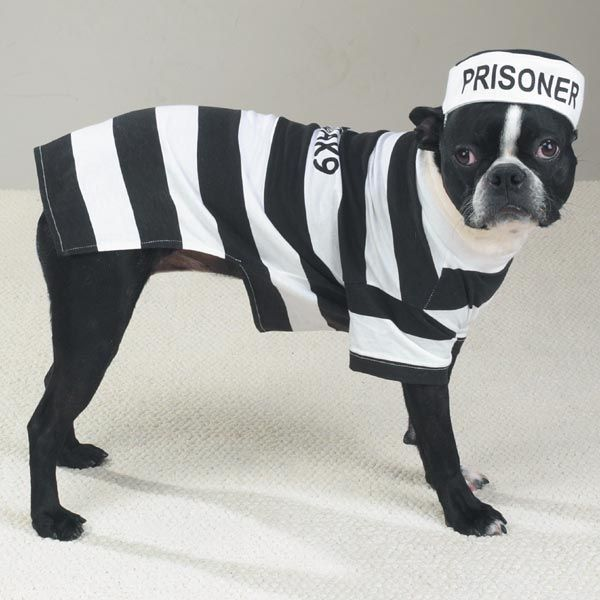 Prisoner Dog Halloween Costume By Casual Canine Pet Halloween
