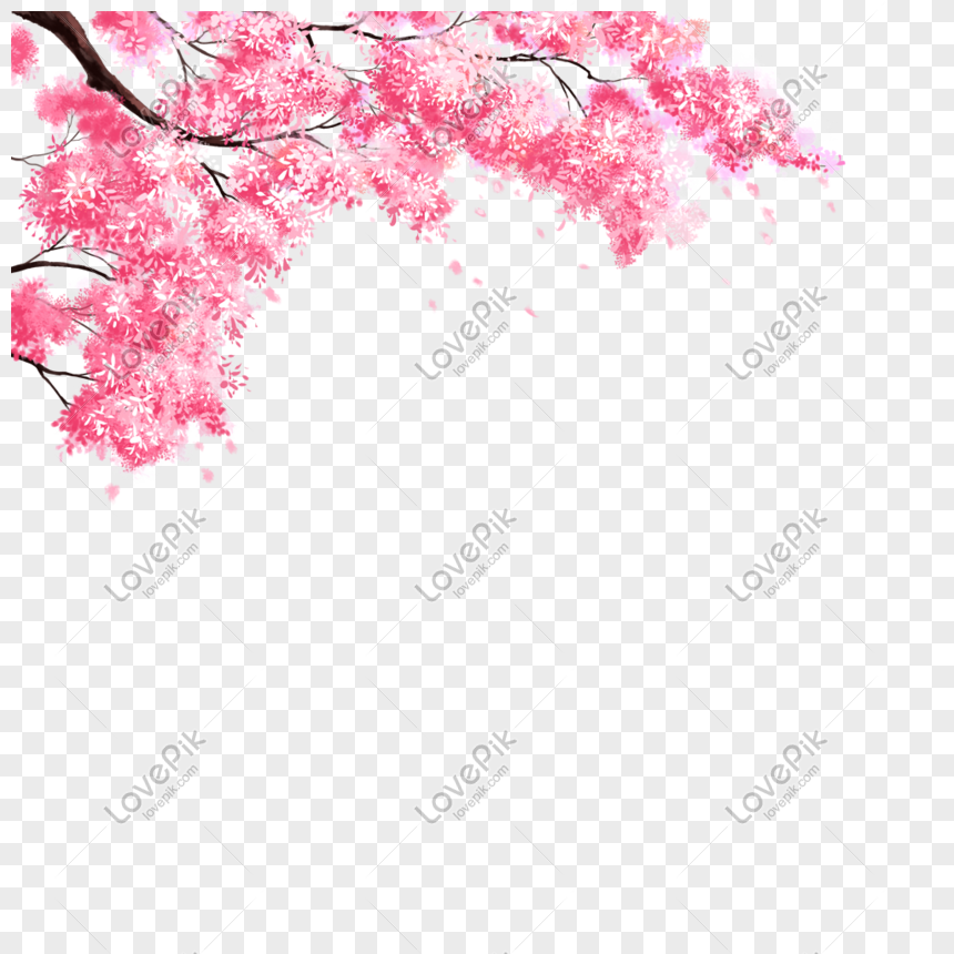 Wallpaper Bunga Sakura Kartun Bunga Sakura Gambar Unduh Gratis Grafik 400955465 Format Gambar Sakura Vectors Photos And Bunga Sakura Wallpaper Bunga Sakura