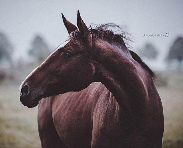 Pin Von Ramona Knaebel Auf Pferde In 2020 Pferd Humor Hubsche Pferde Schone Pferde