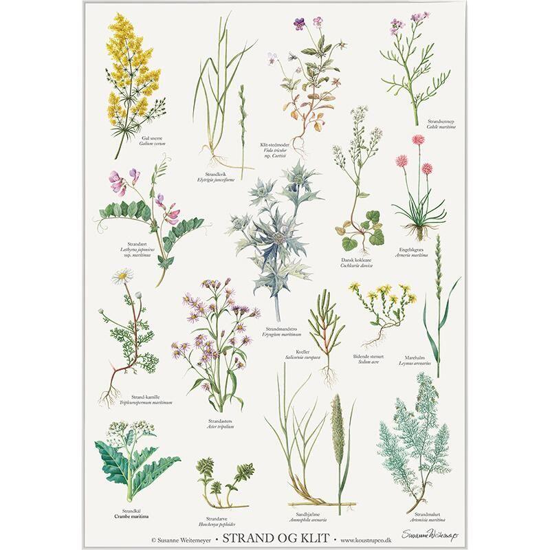 Pin By Alyona Nagel On Redkie Rasteniya Botanika Doodle Art Flowers Botanical Prints Illustrations And Posters