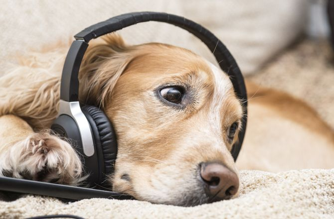 Dog Listening To Music Dog Behavior Food Animals Dogs
